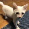 元気な白猫の男の子です。