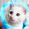 2.5ヶ月♡甘えん坊おっとり白猫パル♂