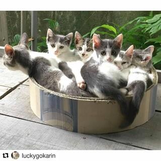 可愛い5匹の子猫の里親募集