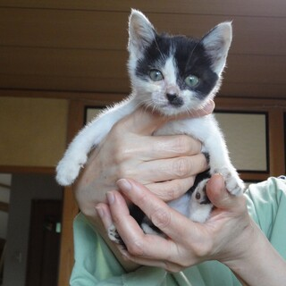 親が居ない野良猫二匹を保護、白と黒のメス。
