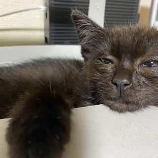生後3ヶ月の元気な黒猫 うにちゃん