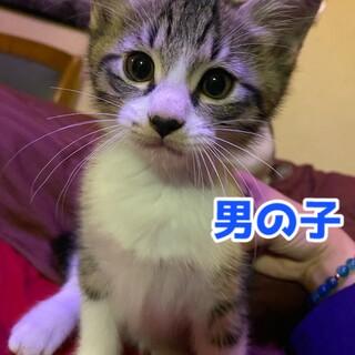 生後2ヶ月7匹の子猫