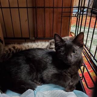 黒猫ジョウくんのおうち、探しています
