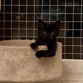 コロンと可愛い黒猫のチョコちゃん♡