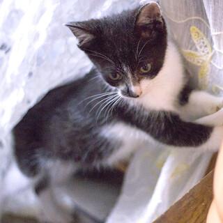 人懐っこく元気いっぱいの仔猫