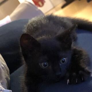 可愛い黒猫くん2ヶ月