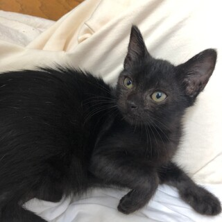 4月生まれの黒猫ちゃん