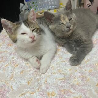 仲良し姉妹 甘えん坊仔猫ちゃん