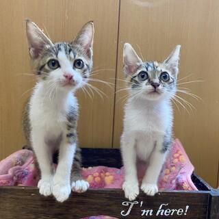 仲良し姉妹のキキとララ1ヶ月半