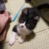 4月生まれの子猫 天然石兄妹 カイト♂