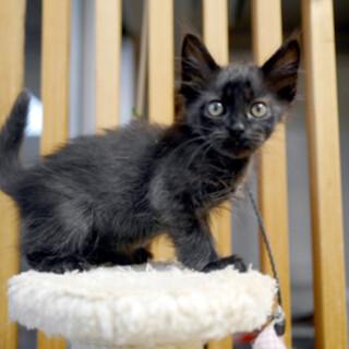 おしゃべり★黒猫★2ヶ月