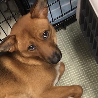 雑種の子犬、まこちゃん♀推定10ヶ月