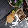 猫は撮ろうとするとフレームアウト