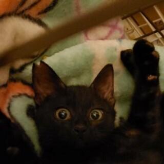 3ヶ月 黒猫 甘えん坊 坊ちゃん