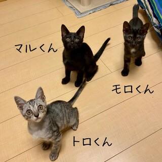 【7/19(日)譲渡会】甘えん坊3兄弟