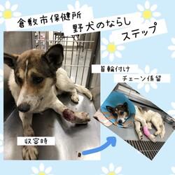倉敷市保健所、野犬の馴らしステップ→丈太郎卒業!