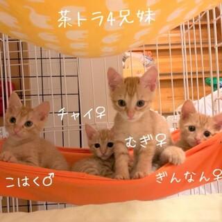 【7/19(日)譲渡会】可愛い4兄妹