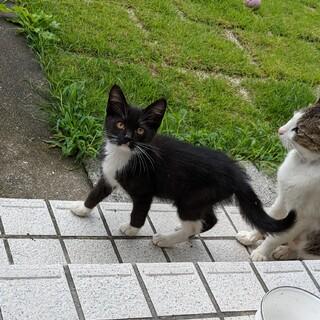 靴下を履いた子猫