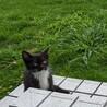 靴下を履いた子猫 サムネイル2