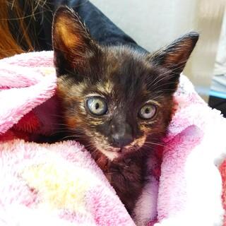 大怪我で保護された子猫