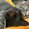 人なつこい甘えん坊のオス子猫です。 サムネイル4