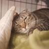 断脚のモワちゃん、人なれ訓練中、ツンデレ猫さん サムネイル3