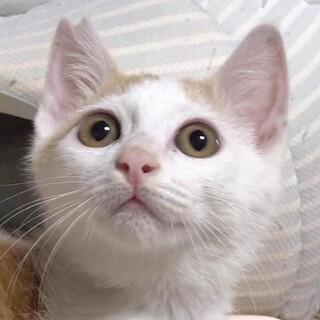 肩乗り猫^_^思い切り甘えたいにゃー