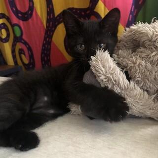 お転婆だけど甘えん坊の黒猫そらちゃん