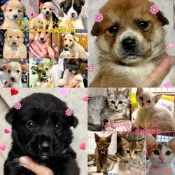 仔犬&仔猫の譲渡会in滋賀