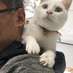 犬と猫の里親探し会 サムネイル3