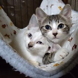 猫の里親会in 牛久 茨城県