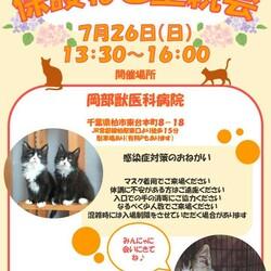 千葉県柏市開催/ふくねこや譲渡会