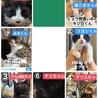 7匹の子猫‼️緊急で里親さん募集中