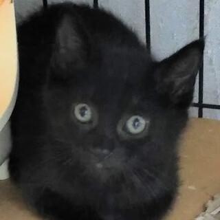 ザ・黒猫♡2ヵ月半男の子レンくん