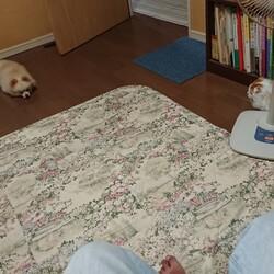 犬と猫の対面