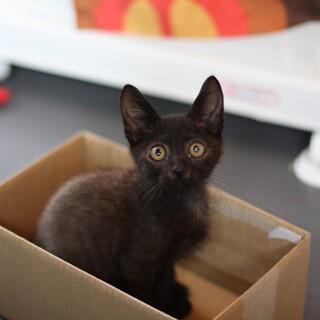 元気いっぱい黒子猫(川口くん)