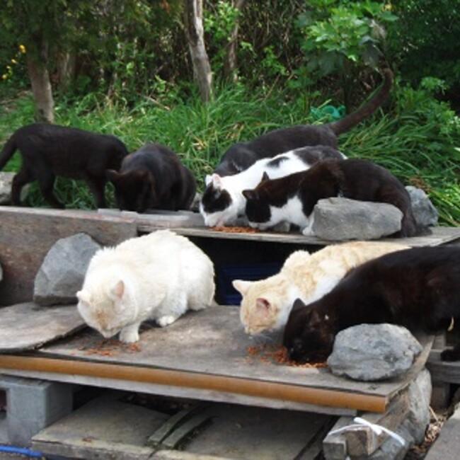 ムラマツ猫の会のカバー写真