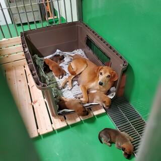 母子で収容 中型犬のワンコ