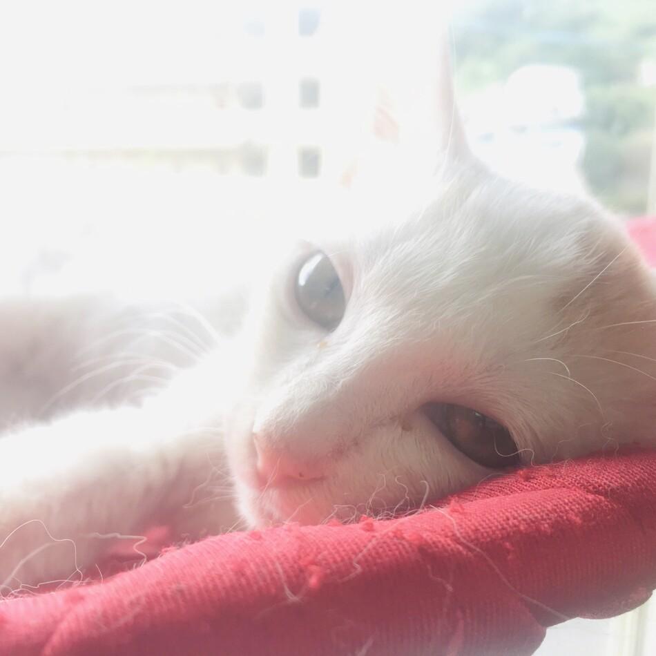 ユイちゃんのカバー写真