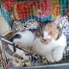 猛暑のため開催中止します【相模大野駅前北口デッキ】♪猫の譲渡会♪