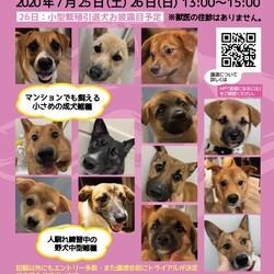 保護犬ふれあいカフェ GUARDIAN 譲渡会  サムネイル1