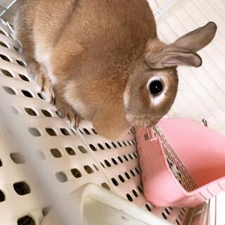 ミニウサギのメロちゃん