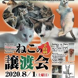 8/1(土)猫譲渡会 in 千里山