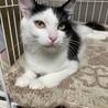 フカフカ毛並みで小顔の美猫❤︎オリーブちゃん サムネイル2