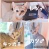 3兄妹キジ子猫(2ヶ月)