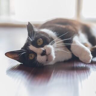人間大好き、猫とも仲良くできる優しいまつこです。