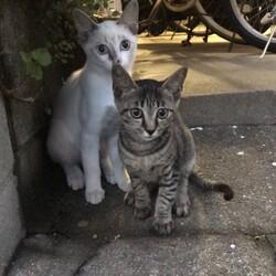里親募集中の母子猫達