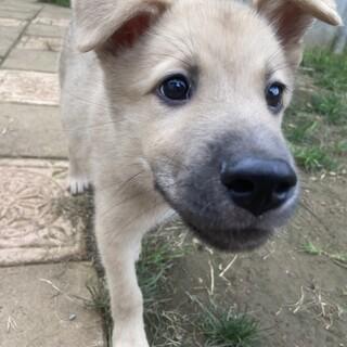 Mellow's Pups #2♡ Rolph