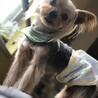 ヨークシャーテリア♂3歳 サムネイル2
