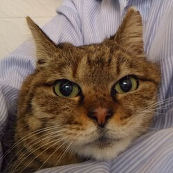 TVでお馴染みの猫のチグちゃん主催のお見合い会 サムネイル2